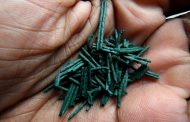 5 Amazing Spirulina Nutrition Facts You Wish You Knew Before