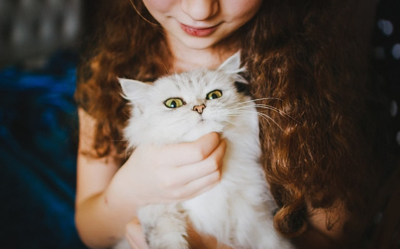 8 Health Benefits of Owning a Cat